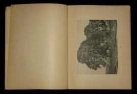 """Книга """"Беловежская пуща"""", Е. П. Вишняков"""